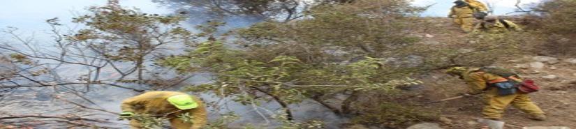 Afectó incendio forestal dos mil 310 hectáreas en San Pedro Mártir
