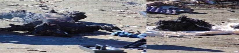 Ejecutan y prenden fuego a persona en Cerro Azul