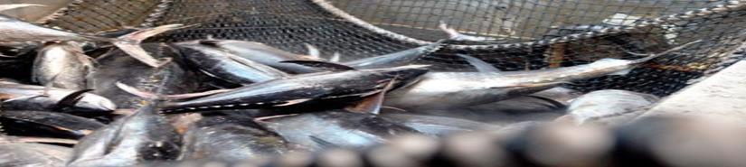 México pierde batalla del atún frente a EU