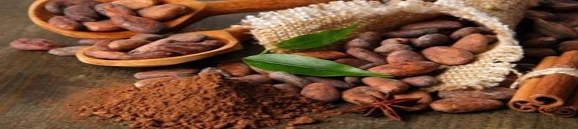 La industria chocolatera busca reactivar el cultivo del cacao en el campo  mexicano