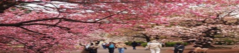 China en flor (VIDEO)