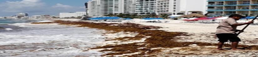 Asistirán más de 15 países a encuentro por sargazo en Cancún