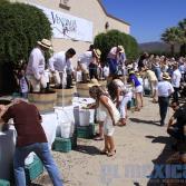 Fiesta de la vendimia 2016 L.A CETTO
