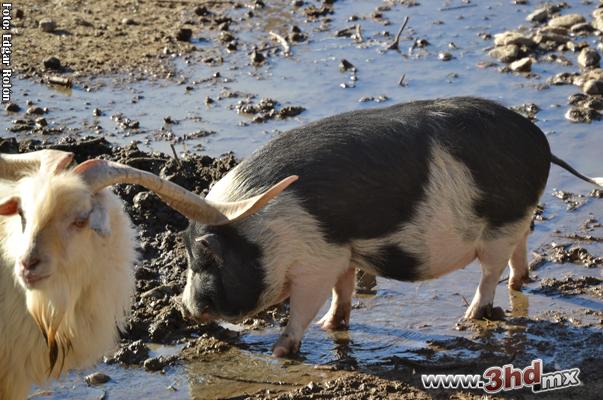 Animales en el Parque Morelos