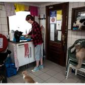 Convierten barcaza en refugio de felinos