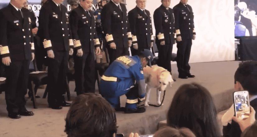 La perrita rescatista Frida se jubila (VIDEO)
