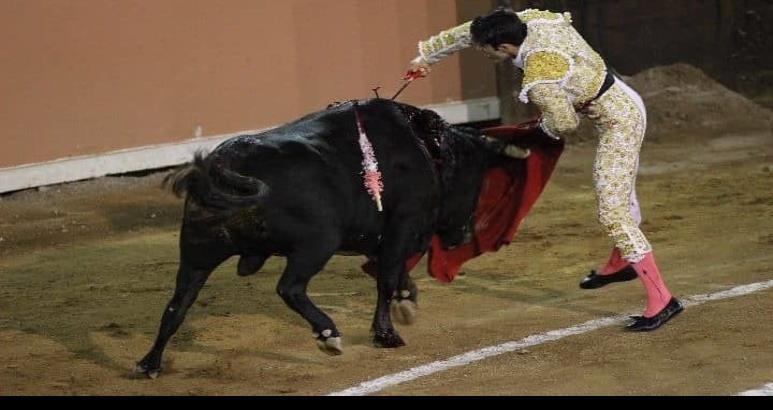 Aprueban ley que prohíbe corridas de toros y peleas de gallos en QR