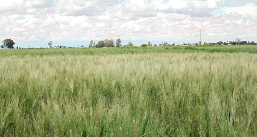 Deja beneficios la SADER a pequeños productores del campo