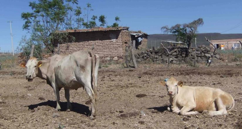 Productores de leche exigen etiquetado en alimentos no certificados