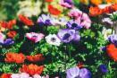 Trucos para cuidar tu jardín con poco esfuerzo