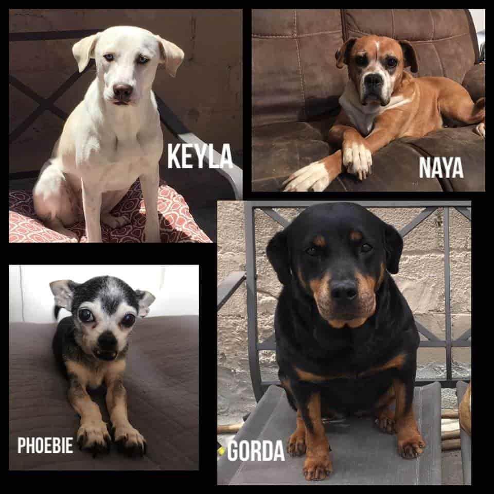 Día Mundial del Perro| Lectores de EL Mexicano nos comparten sus fotos
