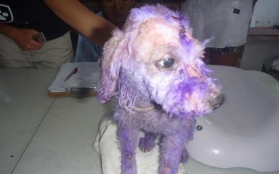Falso, que feministas hayan grafiteado a perro en marcha