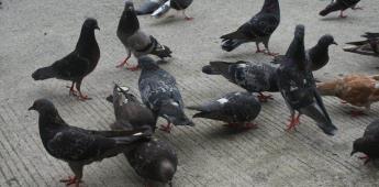 Hombre captura palomas en CDMX