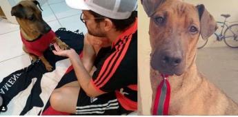 Aficionado del Flamengo revende su boleto para pagar la quimioterapia de su perro