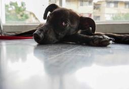 Perro narra la aventura de su llegada a Italia