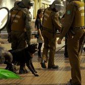 Negro Matapacos, el estandarte de las manisfestaciones en Chile