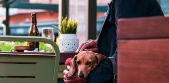 7 ciudades pet friendly en Latinoamérica