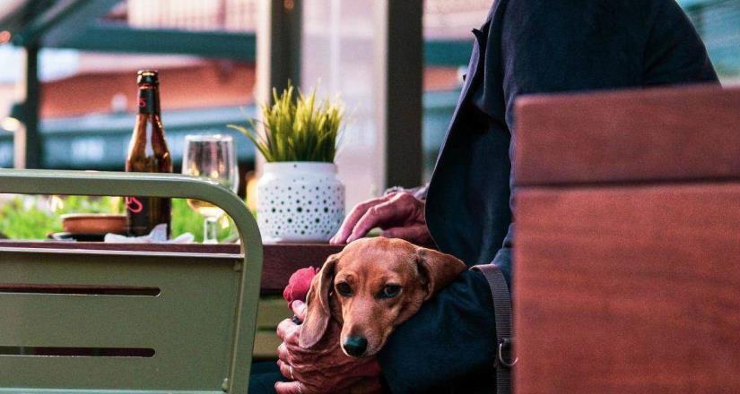 7 ciudades pet friendly en Latinoamérica