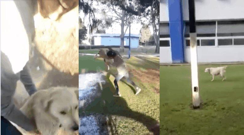 Joven arroja a perro en un charco, video difundido como denuncia por parte de la UACh