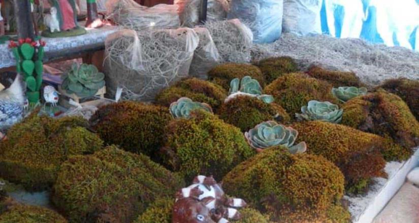 Es ilegal la venta de musgo y heno