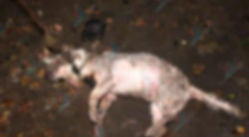 Exigen justicia para Perrito Quemado, lo quemaron vivo