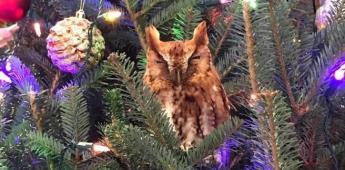 Compran árbol de navidad con búho incluido