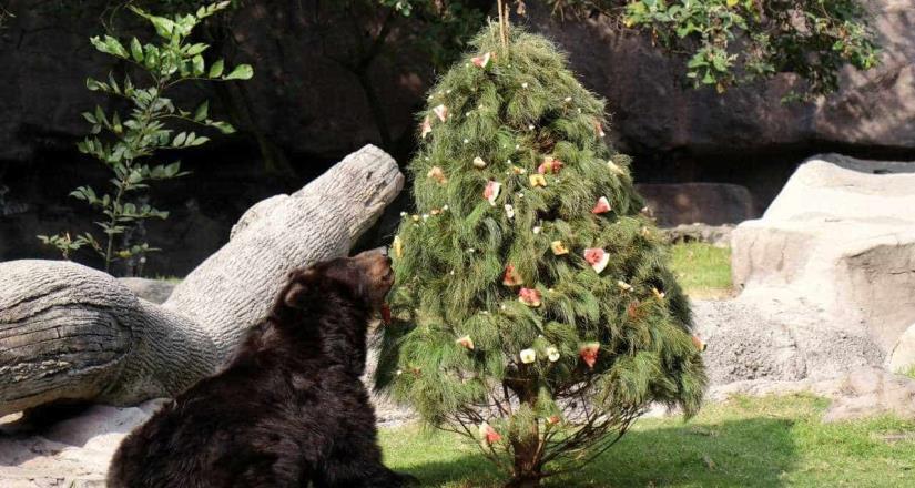 Animales de los zoológicos de la CDMX también festejan la Navidad