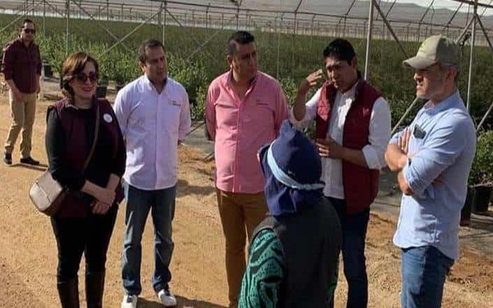 Inspecciona la STPS a empresas agrícolas de San Quintín