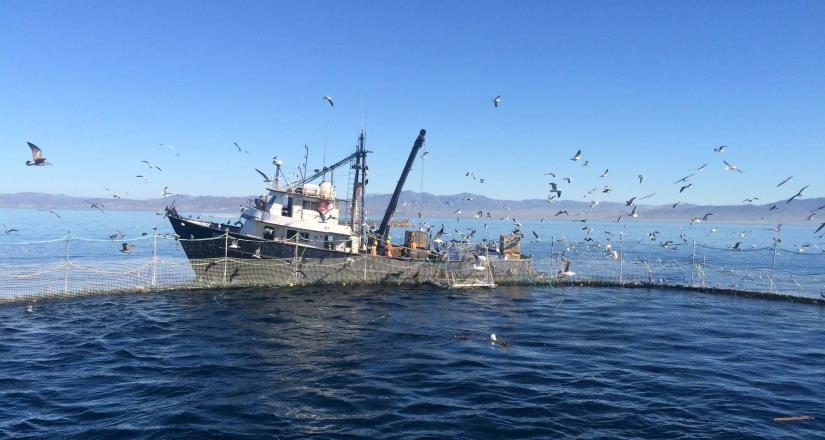 BC en primer lugar nacional en producción de atún aleta azul