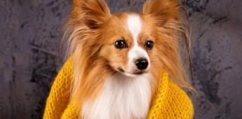 Perritos contra el frío, ¿qué sienten y cómo protegerlos de las bajas temperaturas?