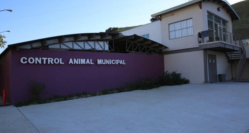 Control Animal Municipal invita a campaña gratuita de esterilización