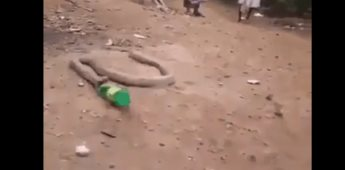 Serpiente vomita una botella de plástico