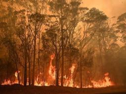 Australia le pide a casi 250,000 habitantes evacuar debido a incendios forestales