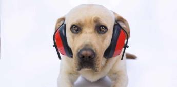 Spotify lanza listas de reproducción para tu perro