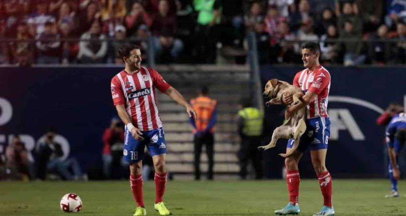 El San Luis busca a la perrita que invadió la cancha