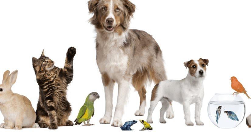 En lugar de mascotas debemos llamarlos animales de compañía: PETA