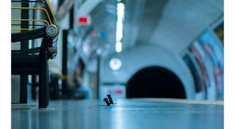 Ganadora de un premio la foto de dos ratones peleando en un metro de Londres