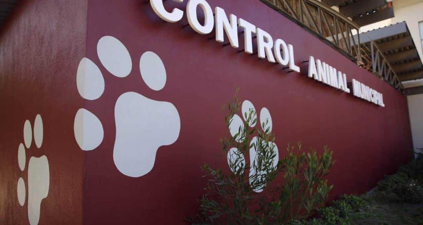 Reconocen sensibilidad de Ayuntamiento de Tijuana para atender mascotas