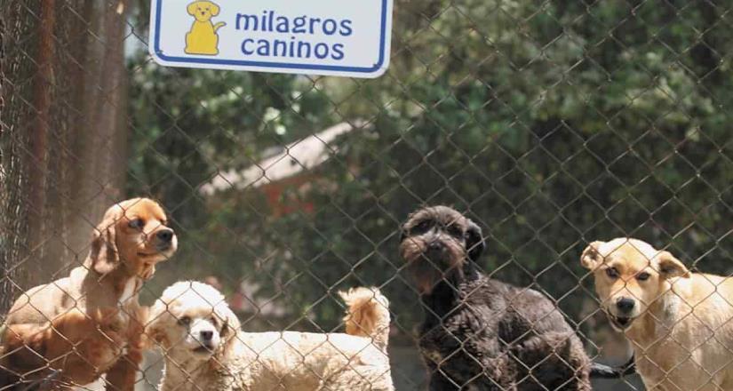 Van por castigar con 5 años de prisión a quien torture a perros