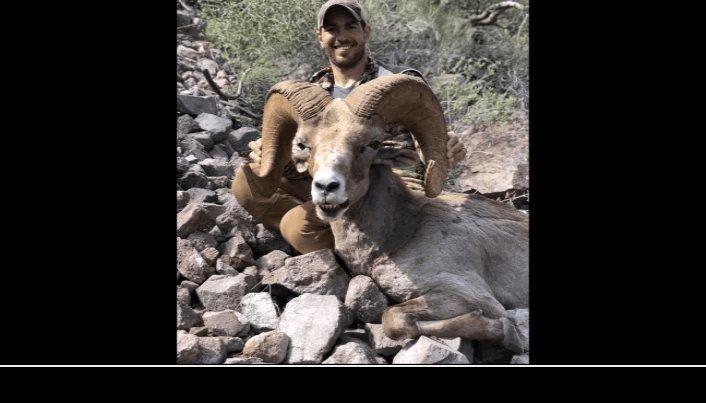 Profepa investiga caza de borrego cimarrón en zona no permitida