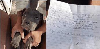 Niño da en adopción a perro para que su padre no lo maltrate