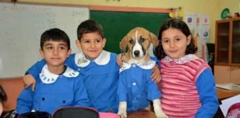 Findik, perrito que se convirtió en estudiante de una escuela en Turquía