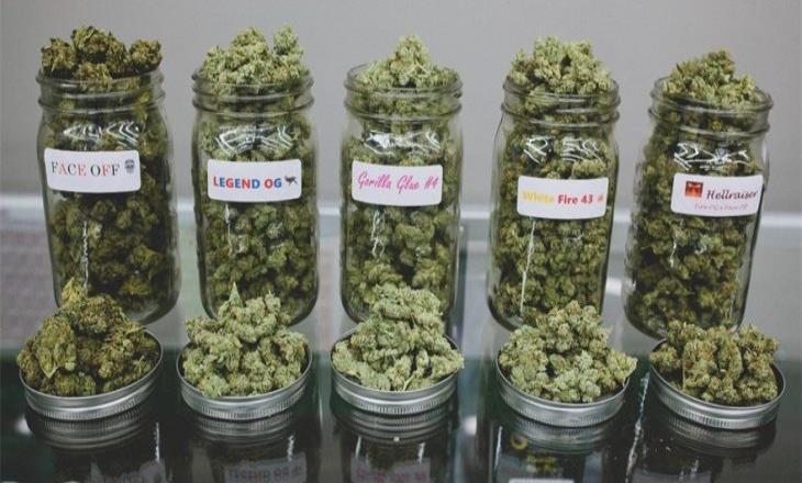 Piden reducir 25 mil condenas por mariguana en San Diego