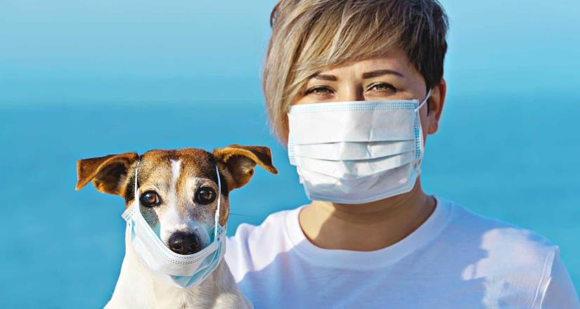 ¿Cómo cuidar a tus mascotas durante la contingencia por el COVID-19?