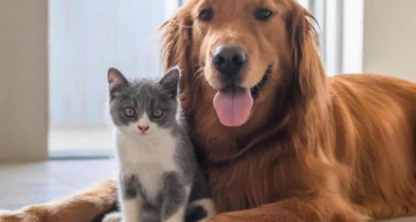 Veterinarios son esenciales para el bienestar animal  durante la contingencia