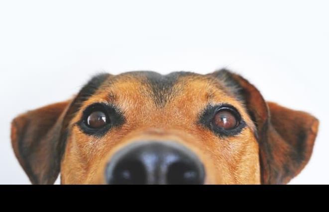 """130 clínicas veterinarias se suman al programa """"Médicos y Mascotas en contingencia"""""""
