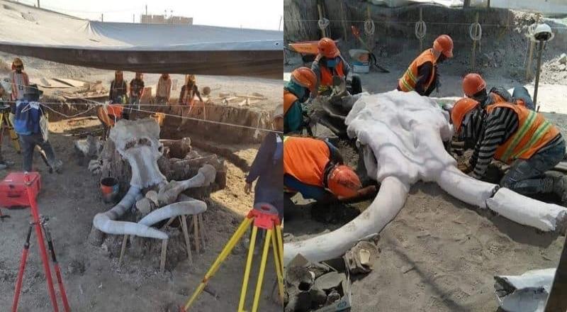 Encuentran 70 mamuts en la base área de Santa Lucía
