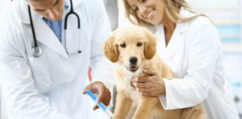 """MSD Salud Animal impartirá el Webinar para Médicos Veterinarios """"Finanzas en época de crisis"""""""