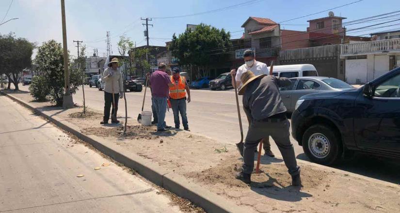 Plantan 150 árboles en el camellón del bulevar Bellas Artes