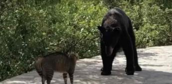Oso pasea por N.L., piden que oso de Chipinque no sea llevado a un zoológico